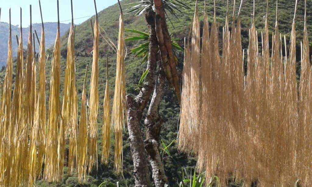 picture of iraca palm bundles drying in the sun in sandona, nariño - Colombia a region known among other things for its decorative ceiling-hanging mobiles