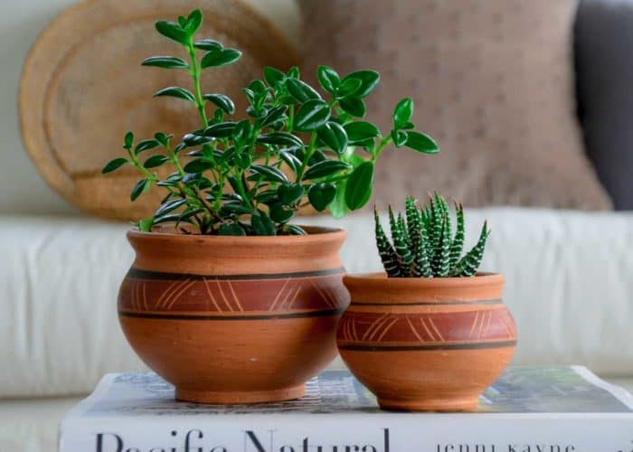 Kiskadee Design Image with Product being Used 2 of a Made in Raquira Round Muisca pot set Natural clay, made in Colombia
