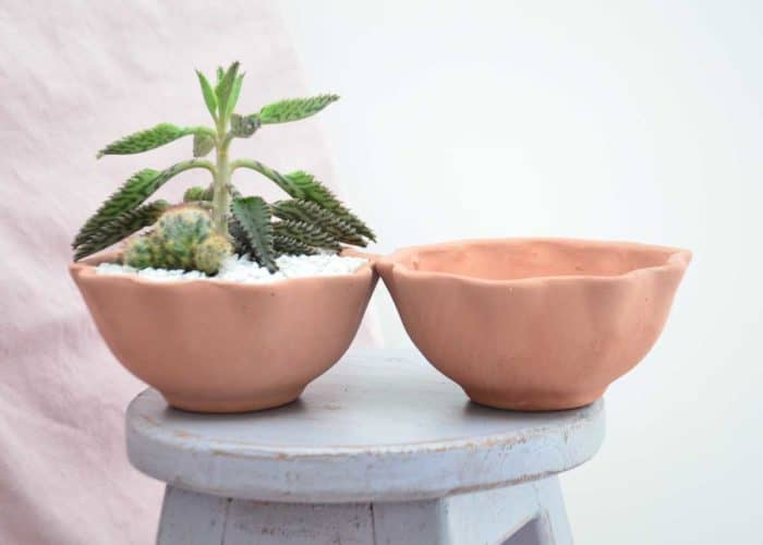 Kiskadee Design Close Up Image of a Wavy delicate handmade wide pot Desert rose clay pot Natural clay, Made in El carmen de viboral